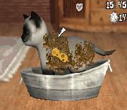 Play Best Friends – Hunde & Katzen Online