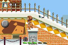 Play Madagascar Online