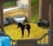 Play Pferd & Pony – Best Friends – Mein Pferd Online