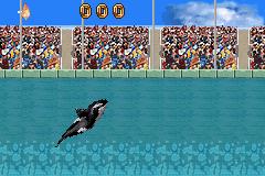 Play Shamu's Deep Sea Adventures Online
